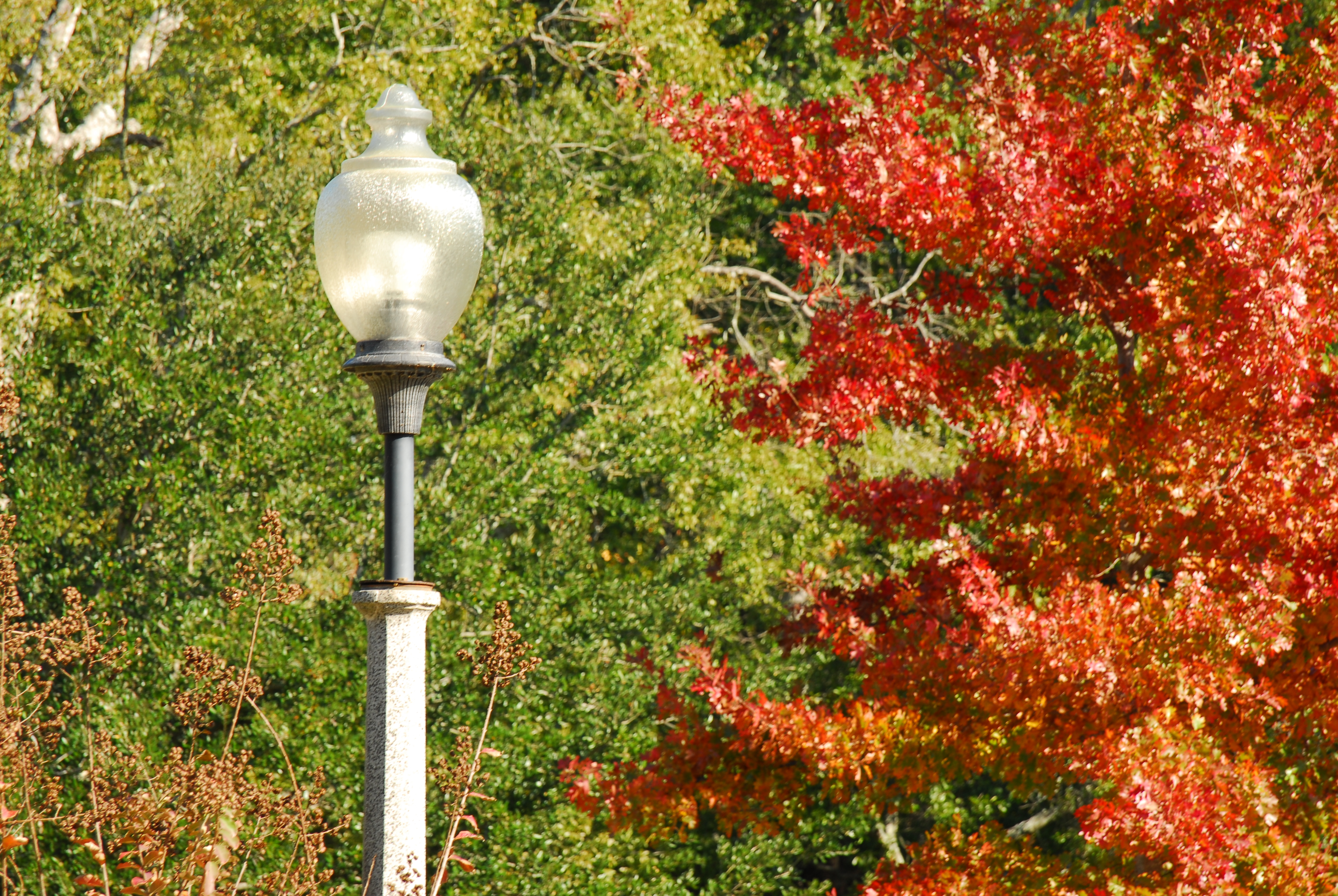 Light post and fall foliage