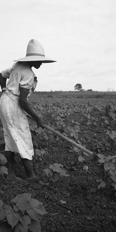 Alabama Negro working in the fields near Eutaw, Alabama.  Dorothea Lange.  Library of Congress