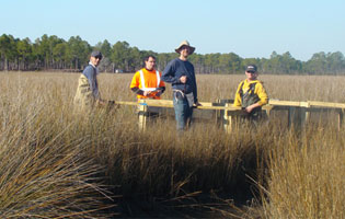 UWA biology professors Dr. Lee Stanton and Dr. Brian Burnes assist senior biology students in research to determine effects of oiling in marsh ecosystems. Pictured left to right are Dr. Lee Stanton, Bobby Edwards, Dr. Brian Burnes and Tyler Earwood.